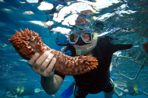 Steve with a sea cucumber
