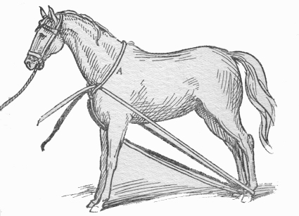 Throwing a Horse