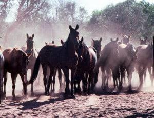 Horseback camping