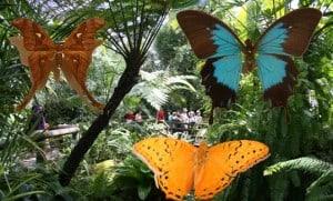 KurandaButterflies