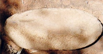 Australian Archaeology